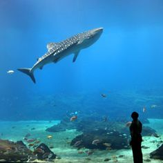 Looking for things to do in Atlanta? Atlanta CityPASS includes admission to the Georgia Aquarium plus four other top Atlanta attractions. And it saves you a bundle!