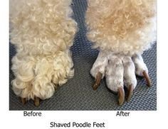 Pet Grooming: The Good, The Bad, & The Furry: Tuesdays Tip 21 Trimming Feet - different feet styles