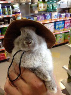 bunnyfood: (via cutestofthecute:via)