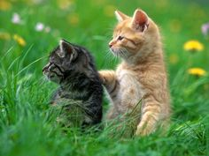 cute kittens & cats photos | pair of cats and their kittens can produce as many as 420,000 kittens ...
