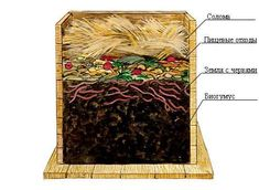 Build Compost Bin, Worm Composting, Worms, Gardening Tips, Grid, Google, Sun, Plant