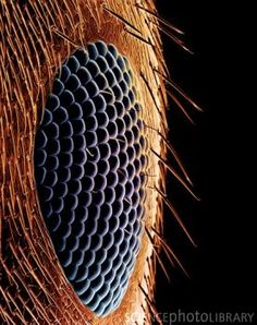 Coloured scanning electron micrograph (SEM) of the compound eye of a black garden ant (Lasius niger). Micro Photography, Close Up Photography, Nature Photography, Macro Fotografie, Fotografia Macro, Beautiful Bugs, Amazing Nature, Foto Macro, Macro Pictures