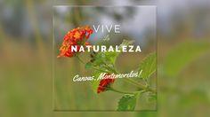 Vive la Naturaleza en Canoas, Montemorelos, NL.  By: Nexox Mx