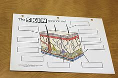 We used this skin label-it worksheet from File Folder Fun to learn about the different structures in skin.