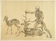 Incredible comparative anatomy    http://photos1.blogger.com/blogger/1717/1584/1600/Man%2C%20stag%20and%20antelope.jpg
