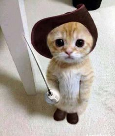 Found this on FB today...I almost died!  Too freakin' cute!  The real Puss n Boots.