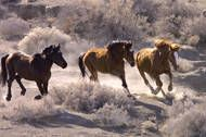 Wild Horses: No Home on the Range JUNE 17, 2013By Retro Report Retro Report: The decades-long quest to save wild horses has run amok, creating a problem that even swooping helicopters, aging cowboys, camera-savvy activists and millions of dollars can't solve.