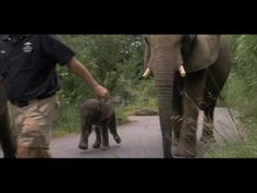 One Lucky Elephant - Film Trailer Elephant Videos, Elephant Gif, African Elephant, Strong Family, Rhinos, Elephants, Favorite Things, Creatures, Action