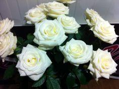 #Rose #Rosa #Lermontov; Availalbe at www.barendsen.nl