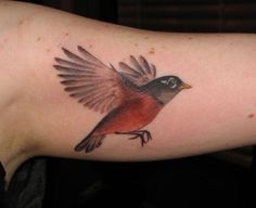 robin tattoos - Google Search                                                                                                                                                                                 More