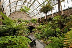Benmore / Younger Botanic Garden, Argyll, Scotland – The restored Victorian Fernery (III) Garden; Botanic Gardens Edinburgh, Chicago Botanic Garden, Tree Fern, Empire Romain, Peat Moss, Gardening Supplies, Plantation, Botany, Botanical Gardens