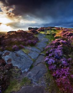 'Pathway to the Peak' or perhaps the Stairway to Heaven. This is Derbyshire, home of my Smedley ancestors, and it is perfectly perfect in every perpetual way. (Sam J Gibbons flickr)