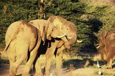 Mvuu Lodge elephant