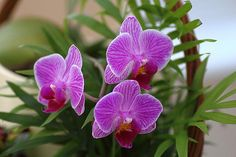 Orchid Trio Flowers, Photographic Prints, In Stock