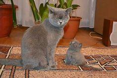 .mere et bébé