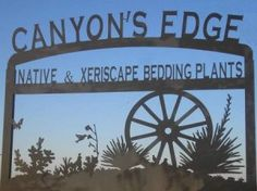 Amarillo Nursery | Perennials.Natives, Xeriscape Plants | Canyons Edge Plants
