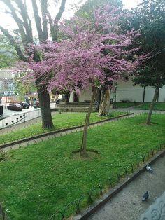 Hermoso árbol en el parque de El Minero
