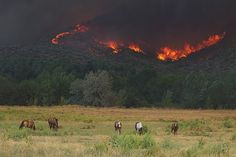 Wildfire Prevention - You May Be Liable for Damages