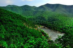 The Appalachians in all her full, green glory.