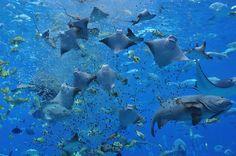Georgia Aquarium!