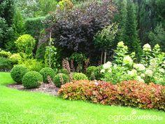 Borówcowy - strona 2 - Forum ogrodnicze - Ogrodowisko