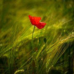 the beauty of flower by Kitty Bern