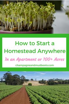 Step by step guide for how to start homesteading regardless of where you currently live including tips and ideas on how to homestead in an apartment, homestead in the suburbs or the ultimate homesteading on acreage. Backyard Farming, Chickens Backyard, Urban Homesteading, Aquaponics System, Grow Your Own Food, Raising Chickens, Farm Gardens, Urban Farming, Natural Living