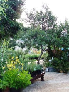 Australian Native Plants Nursery - Ventura, CA