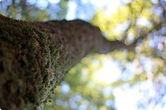 Big Basin Redwoods California State Park