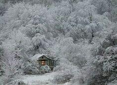 Winter beauty.