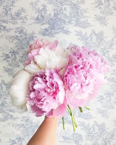 Peonies and toile