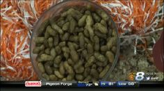Boiled Peanuts Wednesday, August 26, 2015