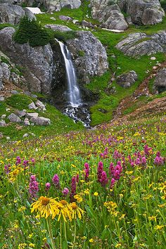 Guy Schmickle, Porphyry Basin Wildflowers: This basin, located in the San Juan Mountains of southwest Colorado, is legendary for its bountiful wildflower blooms in summer.