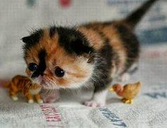 Ahhhhhhhhhhhhhhhhhhhhhhhhhhhhhhhhhhhh!So cute!!!!!!!