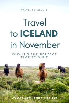 Travel to #iceland in November. The end of the high season, and just before the start of winter, here's why I recommend visiting #Iceland in November. #Travel #Traveltips #Traveladvice #Travelwriter