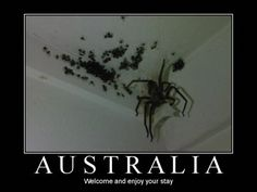 See 15 of the deadliest, scariest, or just plain weird bugs of Australia. #7 is the world's most deadly!
