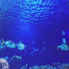 Sea Life #moning #januar #deutschland #niedersachsen #hannover #fish #wendsday #mittwoch #sea #fish