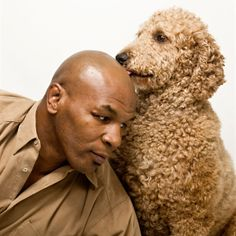 Lafite the Poodle & Mike Tyson Dog Photos, Dog Pictures, Poodle Haircut, Poodle Cuts, Poodle Grooming, Baby Dogs, Doggies, Cat Photography, Labradoodle