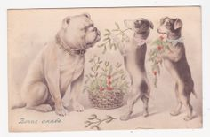 Vintage bulldog postcard from 1910- bulldog receiving flowers from two terriers