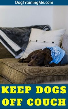 Do you want to know how to keep your dog off the couch? Should you let your dog on the couch at all? Learn how to keep your dog off the couch or any other furniture with some of the tips in our article!