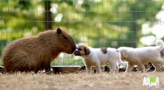 Orphaned Puppies Find an Unusual New Mother - Bites @ Animal Planet