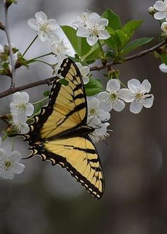 Swallowtail butterfly by Lawrence Hess