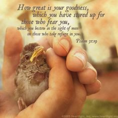 Psalm 31:19How great is your goodness, which you have stored up for those who fear you, which you bestow in the sight of men on those who take refuge in you.
