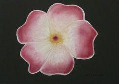 Flor Balinesa  Técnica Pastel  Papel Canson A4