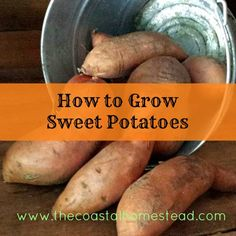 How to Grow Sweet Potatoes. Everything you need to know to start growing sweet potatoes for FREE
