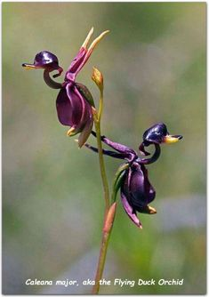 Beautiful and Unique Flower You Should Have In Your Garden 40 - Flowers - Tipos de Jardim Unusual Flowers, Unusual Plants, Rare Flowers, Flowers Nature, Amazing Flowers, Orchid Seeds, Orchid Plants, Flower Seeds, Orchids In Water