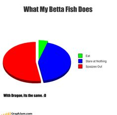 What My Betta Fish Does #bettafish #betta #funnybetta #funnyfish #funnypictures