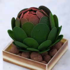 Gorgeous Gourmet Greenery  The BETA5 Chocolate Plant Sculptures are Edible
