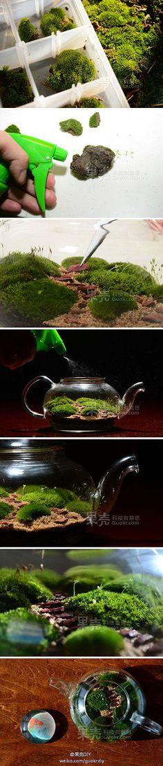 手工DIY 靓&图 艺术设计 沏一壶苔藓…