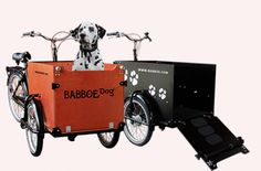 Babboe Dog Cargo Bike